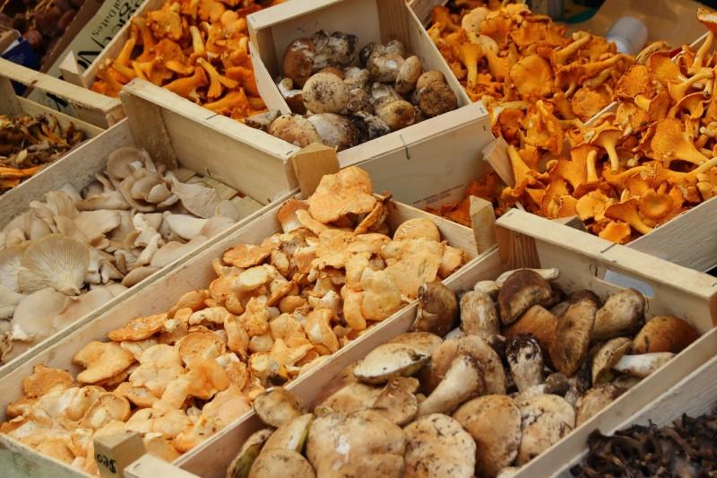 Cream of mushrooms of period