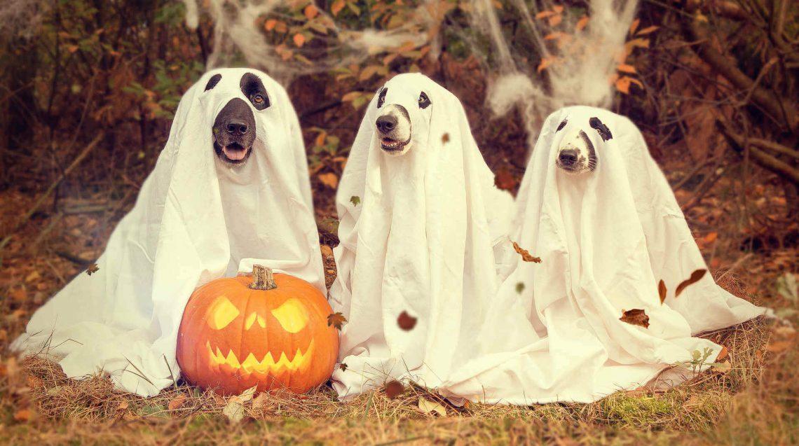 6 Ideas sencillas y económicas para un Halloween de miedo