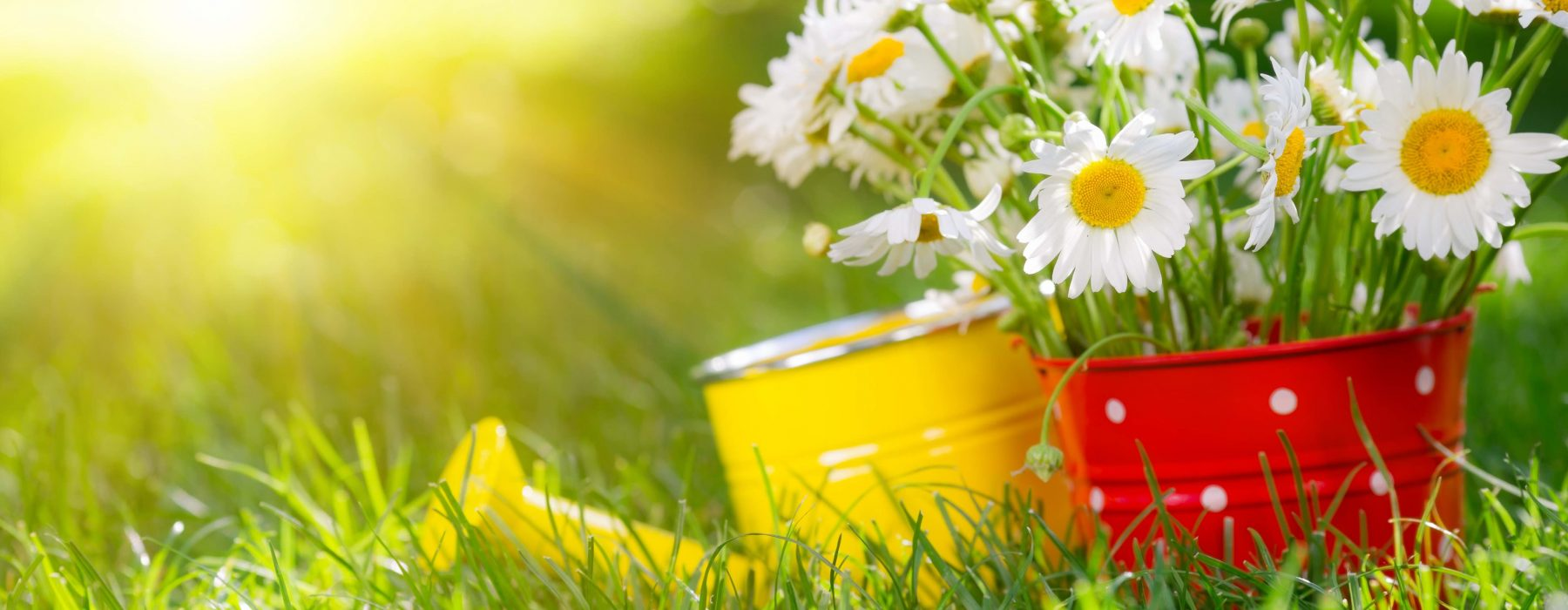 Five tips for a happy spring