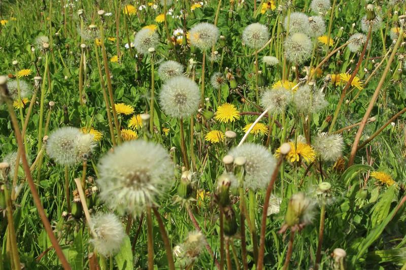 Cómo combatir la alergia al polen durante el invierno