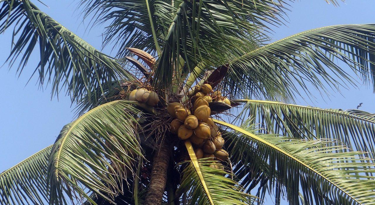 Mis 20 usos favoritos del aceite de coco