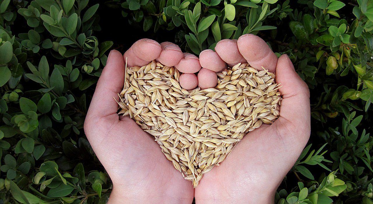 Los granos completos que no deben faltar en tu alimentación