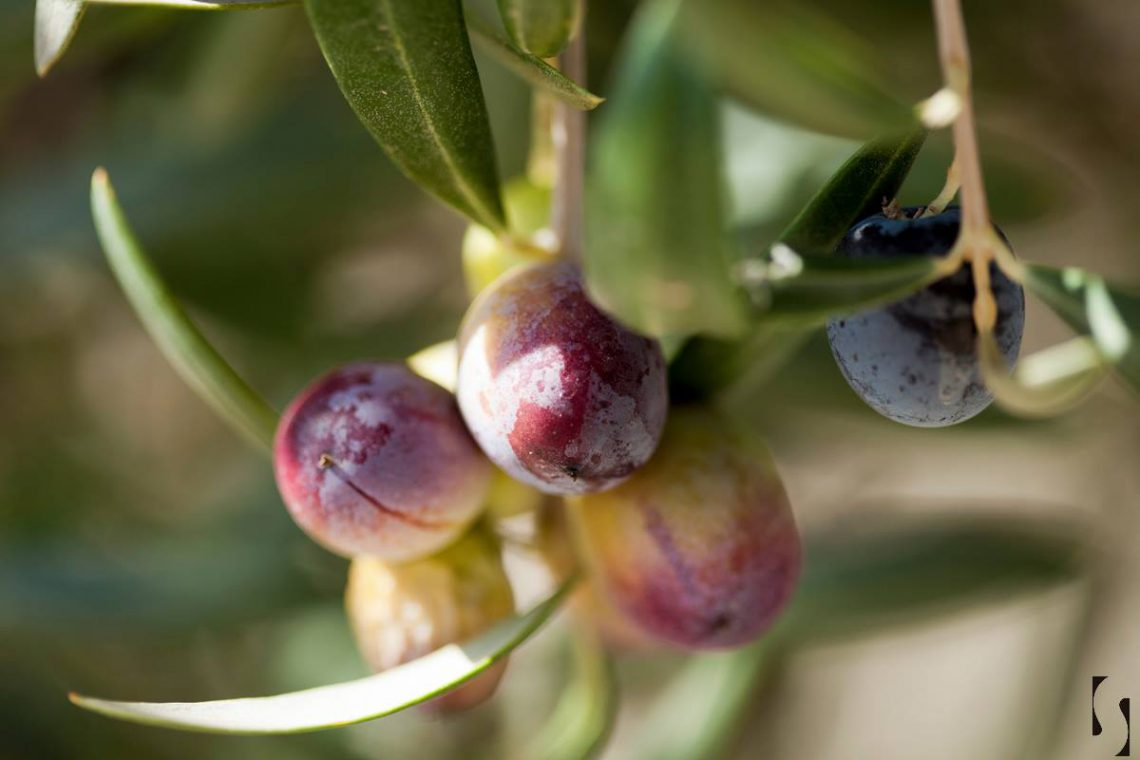 Señoríos de Relleu: Aceites de Oliva Virgen Extra de la Montaña de Alicante