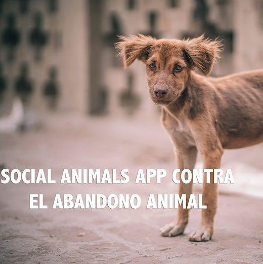 Social Animals App contra el abandono animal