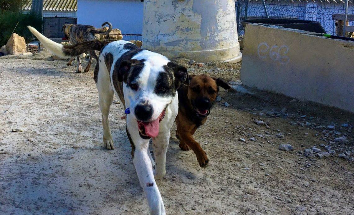 La historia de Pulgui, un perro abandonado con nuevas esperanzas